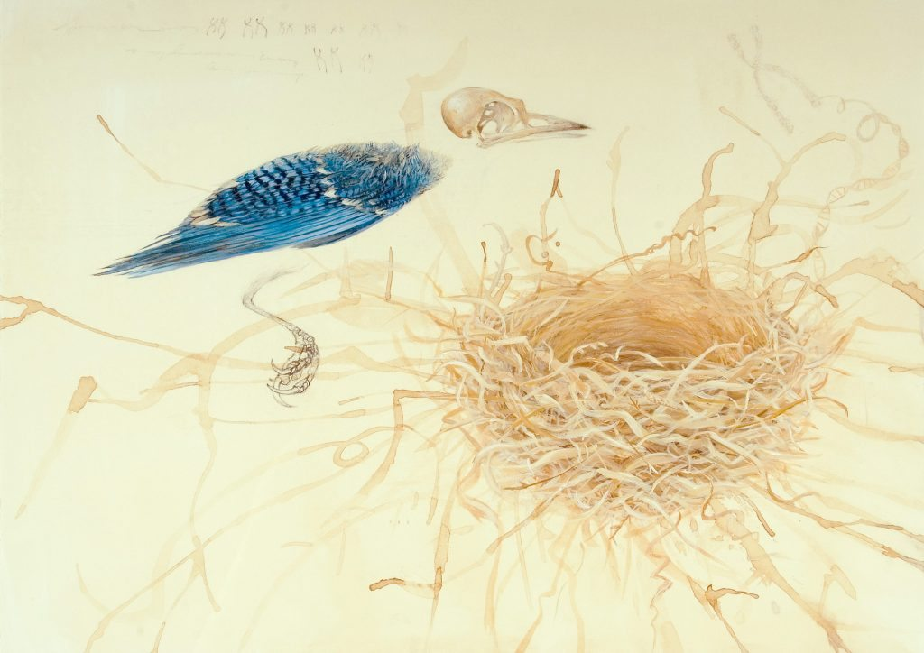 Genomes and Daily Observations (Blue Jay)
