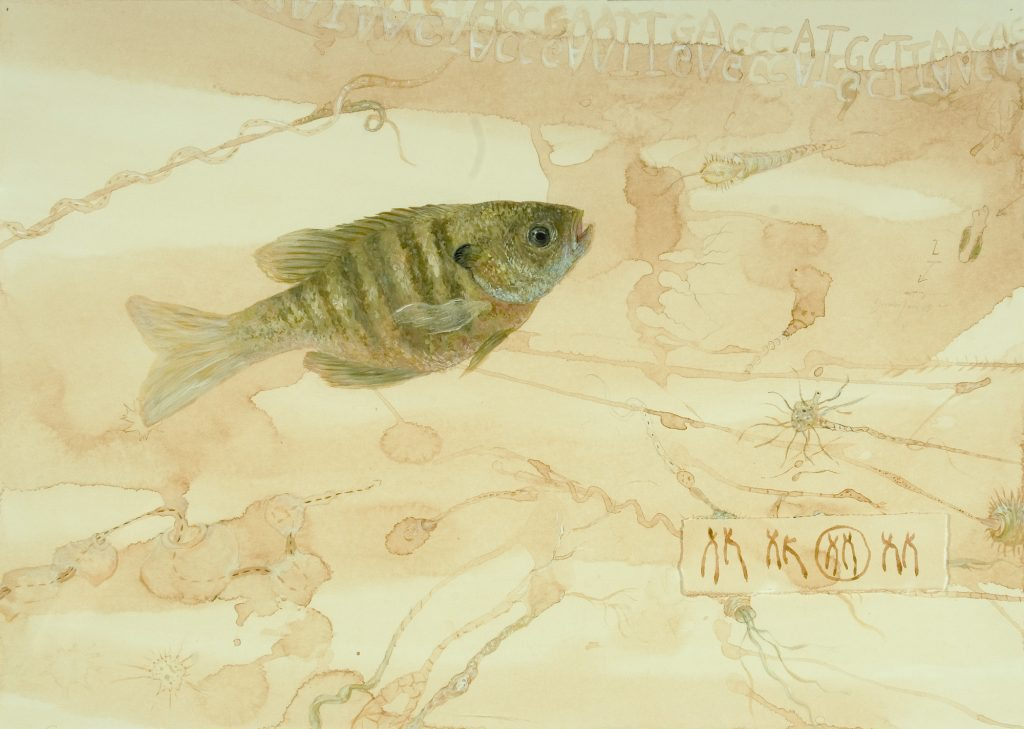 Genomes and Daily Observations (Bluegill)
