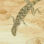 Genomes and Daily Observations (Fence Lizard)