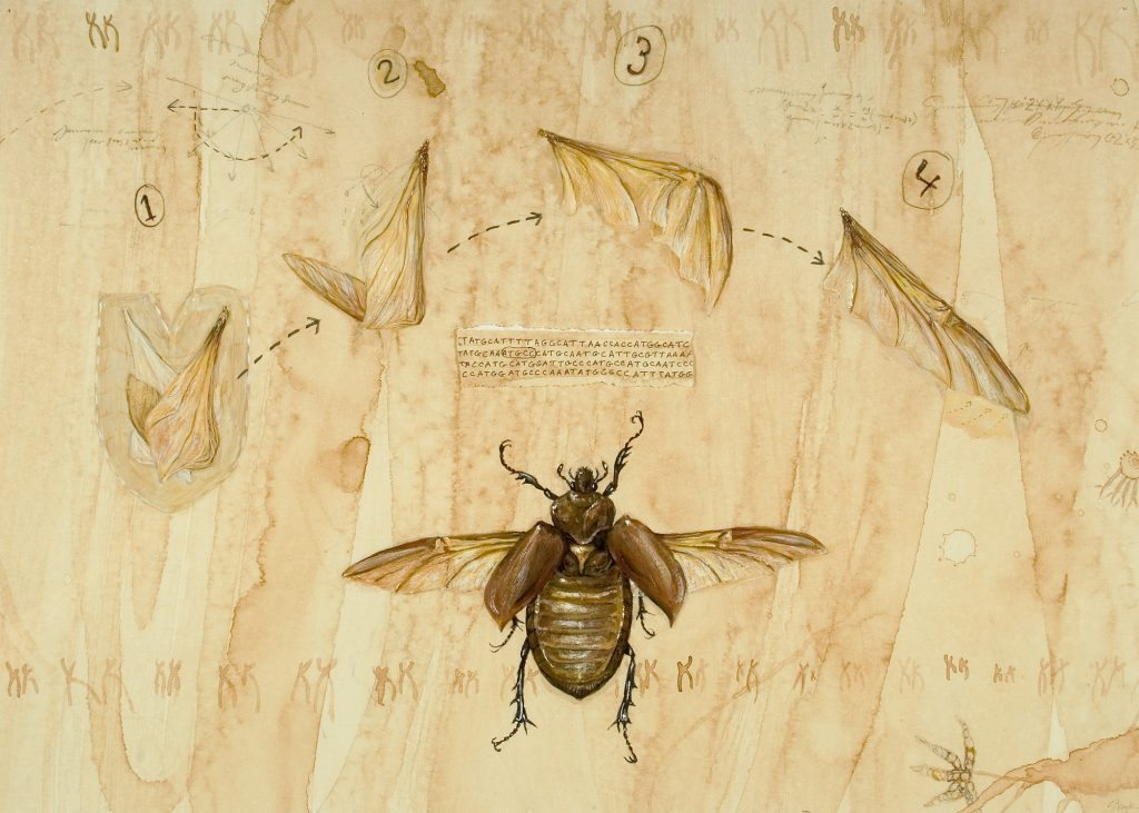 Genomes and Daily Observations (Beetle)