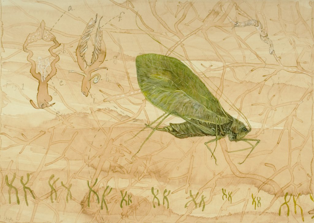 Genomes and Daily Observations (Katydid)