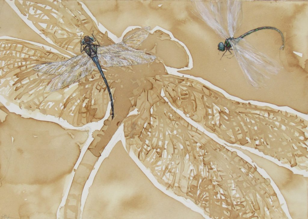 Genomes and Daily Observations (Dragonfly)