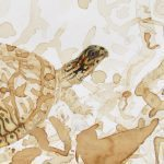 Genomes and Daily Observations (Box Turtle)