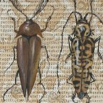 """Political Science (Beetles with Genome)"""