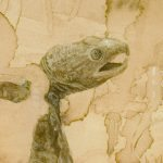 Genomes and Daily Observations (Snapping Turtle)
