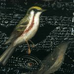 Bestiary Series (Chestnut-sided Warbler)