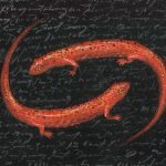 Bestiary Series (Red Salamander)