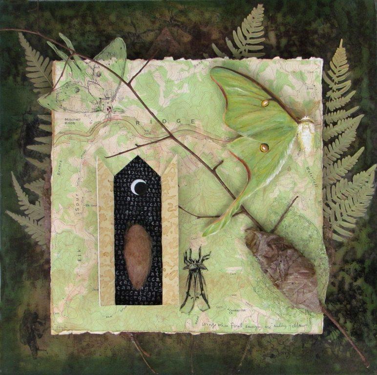 Life Cycle: Luna Moth