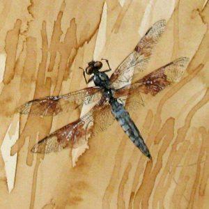 Field Work and Arachne Series